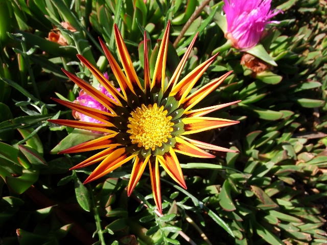 WildlifeInfo - Advice on local nature conservation - Plant